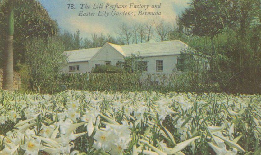 The Lili Bermuda Perfume Factory