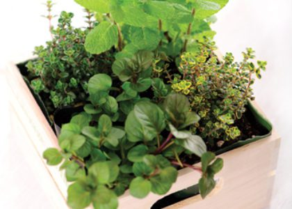 Great Gift Idea: Portable Herb Garden