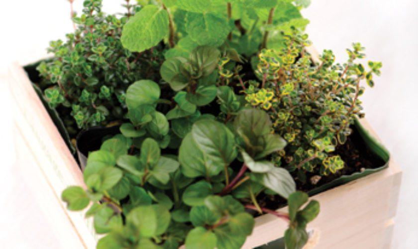 Great Gift Idea: Portable Herb Garden