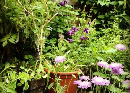 Hello from London: The Perfect English Garden