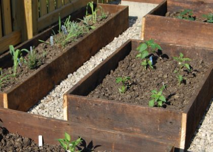 Modern Victory Gardens or Square-Foot Gardening