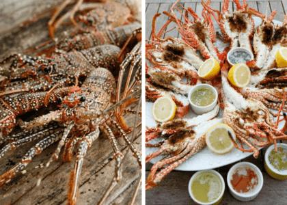 Lobsters in Bermuda