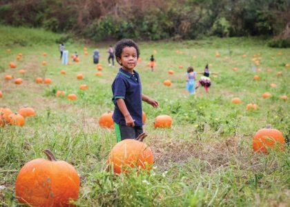 Slideshow: Pumpkin Picking!