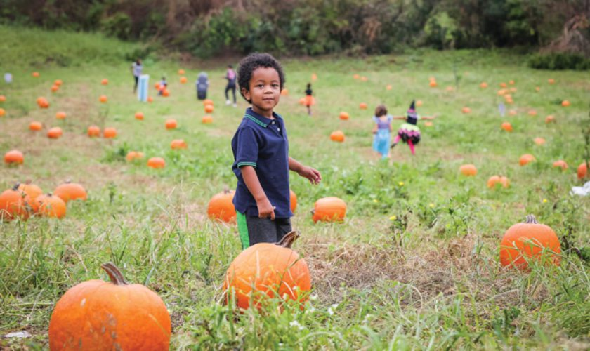 Slideshow: Pumpkin Picking!