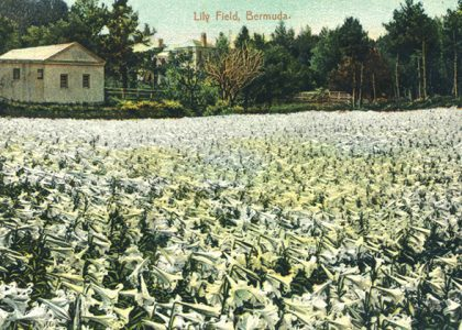 From Battlefields to Lily Fields