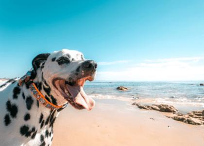 4 of the Best Dog Walks in Bermuda