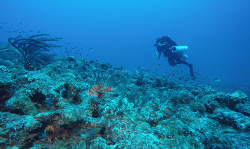 A Team Tackles a Troublesome Fish: BIOS scientists collaborate on projects to reduce Bermuda's invasive lionfish population