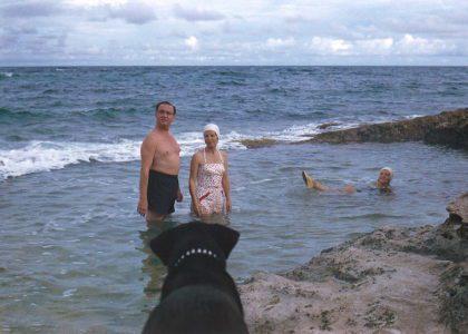 7 Vintage Bermuda Pet Photos You'll Love!