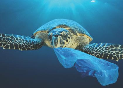 Beleaguered Oceans, Fragile Seas