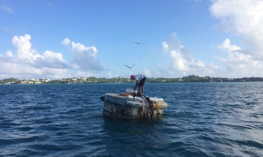 Dive-Bombing Terns: The Hassles of Being A Naturalist with Dr. David Wingate and Miguel Mejías