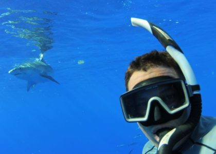 We Should Be Seeing More Sharks Inshore: An Interview with Choy Aming