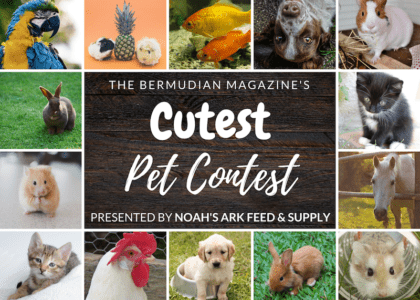 Call for Entries: The Bermudian's Cutest Pet Contest, Presented by Noah's Ark Feed & Supply!