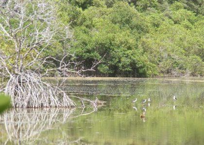 4 Important Bermuda Ponds