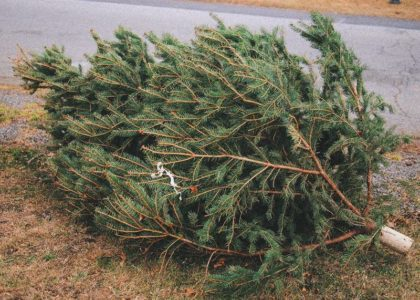 What To Do With Your Dead Christmas Tree