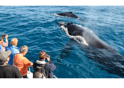 A Guide to Whale Watching in Bermuda