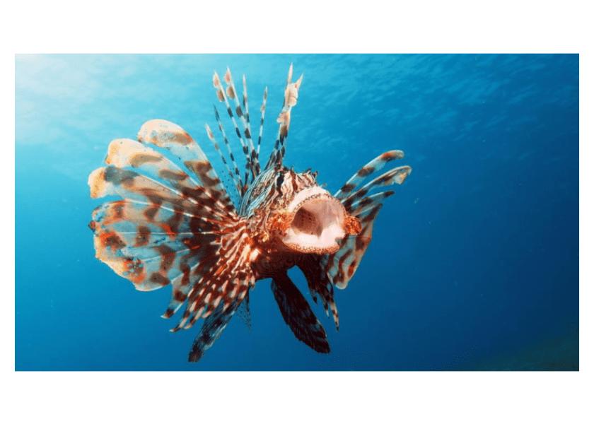 Eat 'Em to Beat 'Em: 3 Delicious Ways to Devour Lionfish