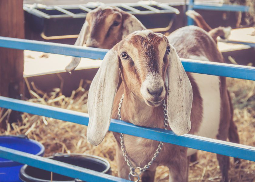 The Ag Show 2019: 7 Things You Should Know Before You Go!