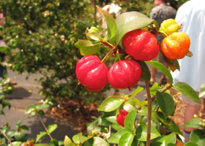Surinam Cherry Jam