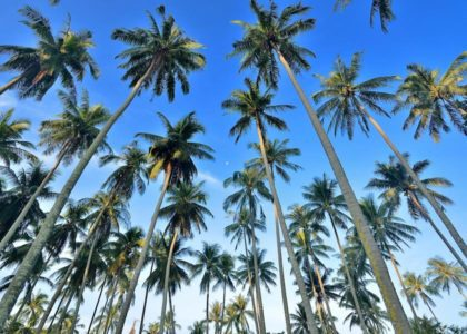 Field Notes: The Coconut