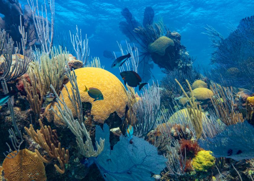 What is the Bermuda Ocean Prosperity Programme?