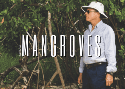 Trees That Go Above and Below: A Guide to Mangrove Exploration