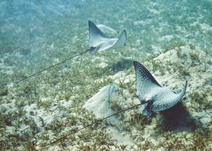 Explore Seagrass Beds by Wading or Snorkeling