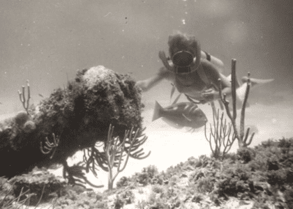 8 Things You Don't Want To Step On In Bermuda Waters