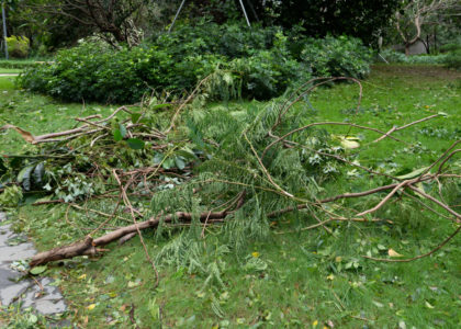 How to Bring Your Garden Back After a Hurricane