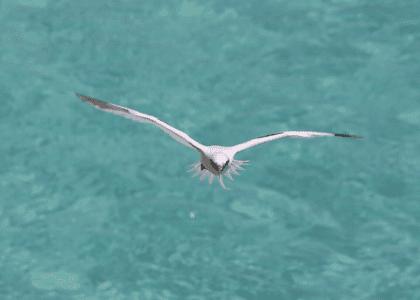 6 NATURAL Reasons to Love Bermuda