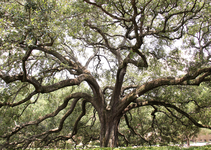 What Your Family Tree Can Tell You About Cancer Risk
