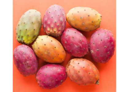 Foraging for Prickly Pears, Plus 3 Recipes You'll Enjoy!