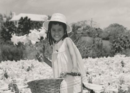 7 Vintage Photographs of Easter Lilies in Bermuda