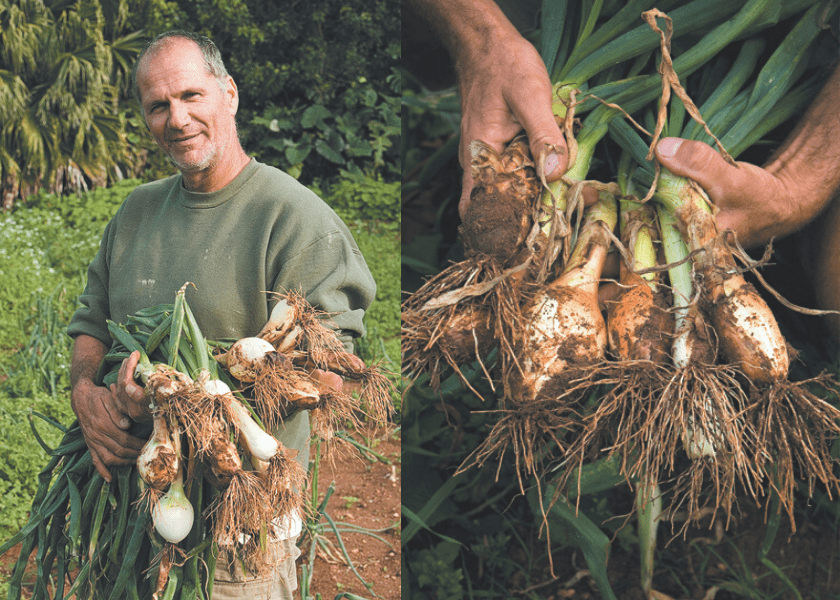 The History of Bermuda's Famous Onion