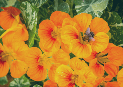 5 Plants that Bees Love!