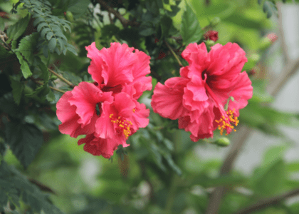 Edible Arrangements: Bermuda Flowers You Can Eat