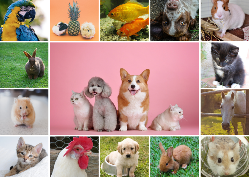 2020 Cutest Pet Contest, Presented by Ettrick Animal Hospital