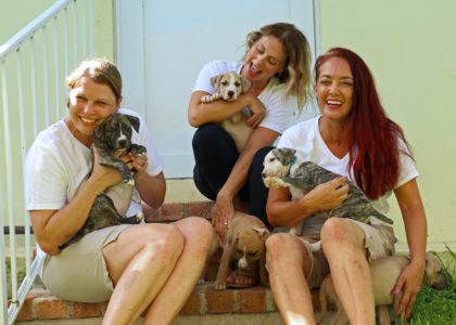 TheraTails: Transforming Therapy through Animals