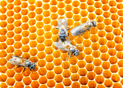 How to Get Your Paws on Local Honey