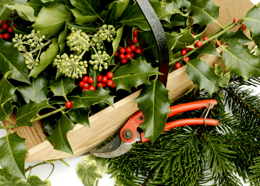 Decorating for Christmas with Bermuda Foliage