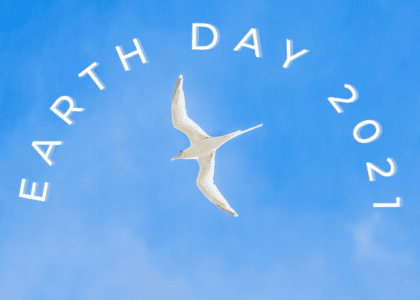 5 Digital Ways to Celebrate the 51st Anniversary of Earth Day