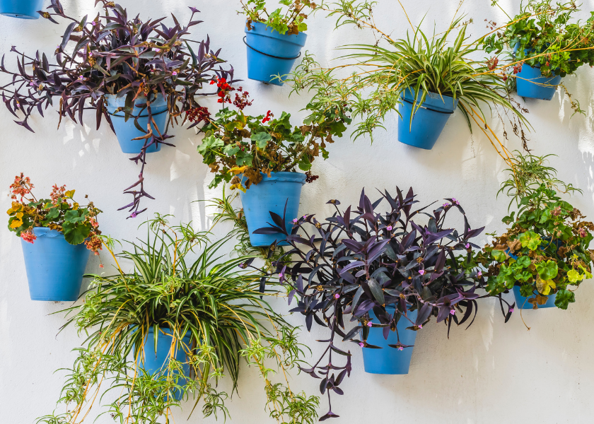 A Plethora of Pots: The Pleasures of Container Gardening
