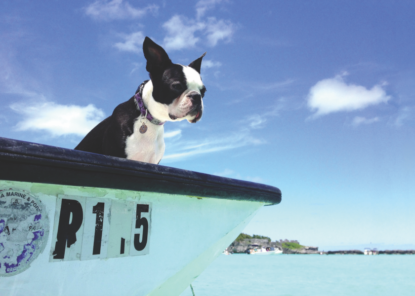 Dog Days: The Best Places to Take Your Bestie